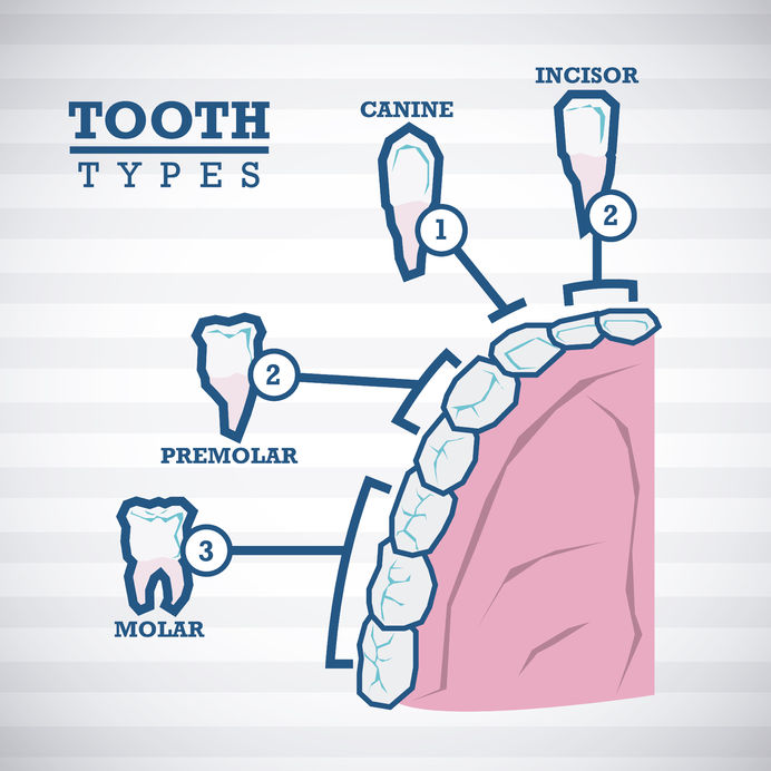 29031037 - dental design over white background, vector illustration