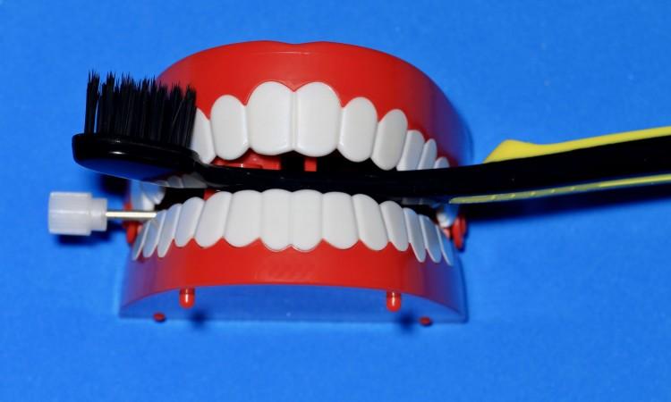 口腔ケア Oral care  口,人の口,口腔,ケア,歯茎,入れ歯のおもちゃ,総入れ歯,おもちゃ,作り笑い,笑い.歯,プラスチック,ユーモア,人工的,動く,ジョーク,横位置,白,目新しいもの,赤,歯ブラシ,歯磨き,歯みがき,清潔,きれいにする,医療とヘルス,ヘルス,